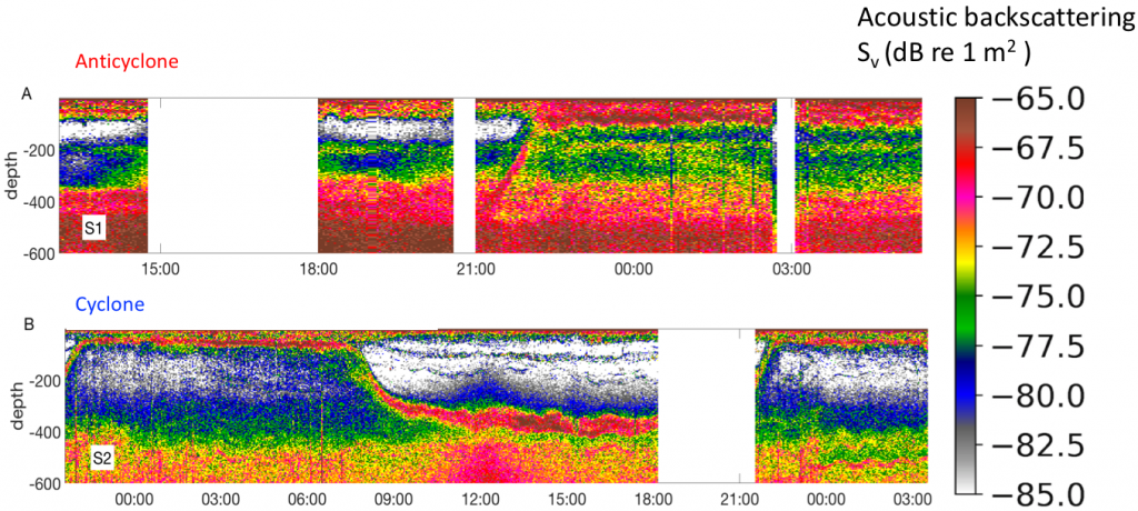 An echogram from (A) an anticyclonic eddy, (B) a cyclonic eddy. White sharks seem to prefer the core of the former (courtesy A. Della Penna)