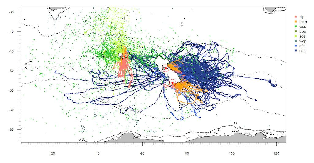 Trajectories of top predators (birds and mammals) from multi-site satellite monitoring in the southern Indian Ocean. (CreditsMalcolm O'tool, CNES postdoc at LOCEAN)